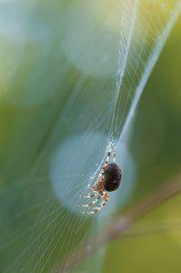 sognare ragni foto1