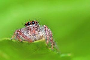 sognare ragni foto2