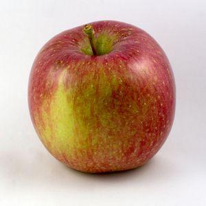 Alla scoperta delle mele fuji un toccasana per la salute - Mele fuji coltivazione ...