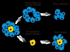 trattamento cellule staminali foto2