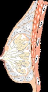 seno tuberoso cause trattamento foto1