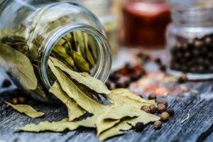 foglie di alloro - laurus nobilis - foto2